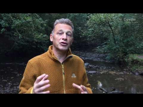 Support Devon beavers with Chris Packham