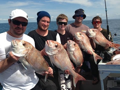 Snapper Action In The Hauraki Gulf With Megabites Fishing Charter