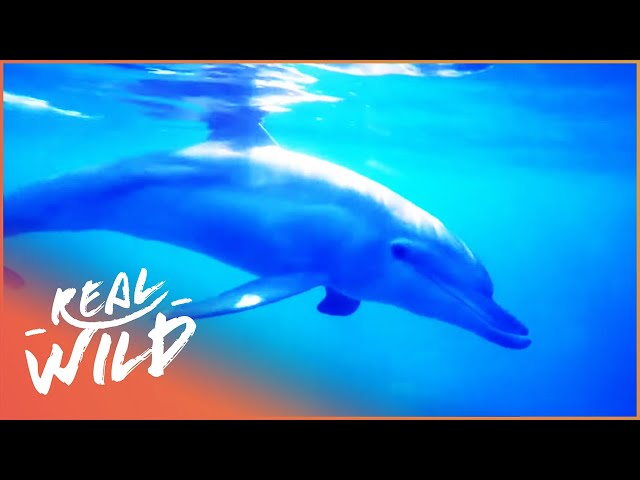 What Is Life Like Under Our Seas? | Animal Society S1 EP1 | Real Wild