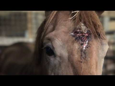 Why We Save Horses From Auctions