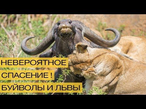 Самые опасные живые существа.