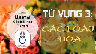 [Học tiếng Nga] Từ vựng 3: Các loài hoa - Цветы | Việt Nga
