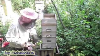 Пчеловодство для начинающих. Многокорпусный улей. Работа на пасеке. Осушка сотов