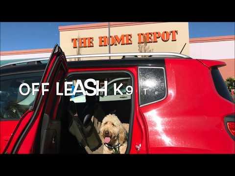 Dog Training in Reno, Nevada! Number One Reno Dog Trainer!