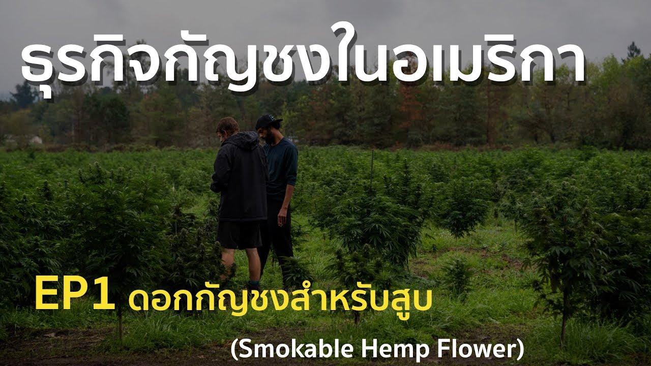 กัญชงในอเมริกา EP.1 ดอกกัญชงสำหรับสูบ