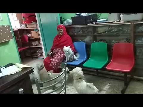 Different Breeds of Dog Vet in Dhaka City @ Dr. Sagir's Pet Clinic 01912251312
