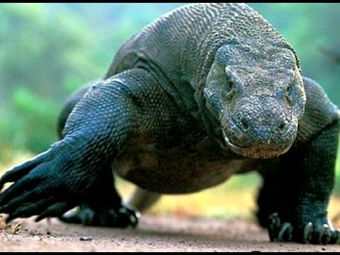 Самые опасные животные мира - Интересно –Сильные хищники ...