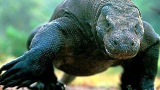 Самые опасные животные мира - Интересно –Сильные хищники – Опасные змеи.