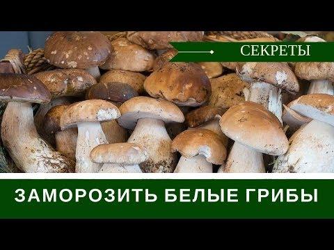 Как заготовить белые грибы на зиму