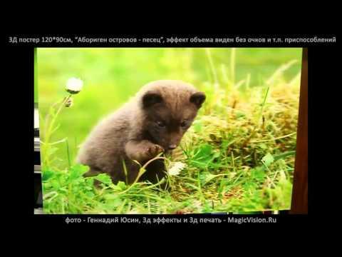 """3Д постер """"Абориген островов -  песец"""" фото Геннадий Юсин, 3д печать MagicVision Ru"""