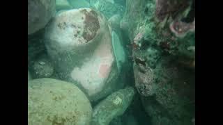 정글의법칙 바닷속 크레이피쉬, Makara & wellington crayfish diving