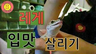 레게에게 주사기 피딩 - 파충류(Reptile)  이색…