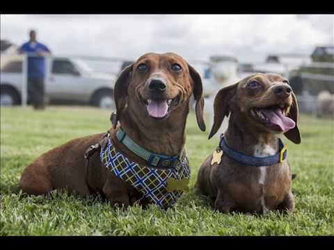 Happy Dogs 2020