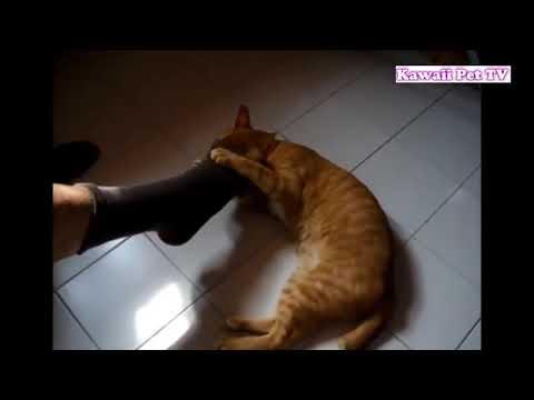 Приколы с котами. Котики приколы. Подборка приколов про котов #36