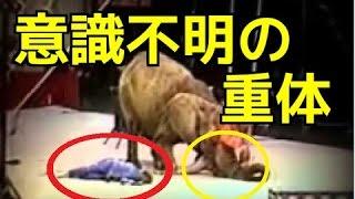 【衝撃映像】ゾウが大暴走!ライオン、トラ、ヒョウが霞んで見える程の...