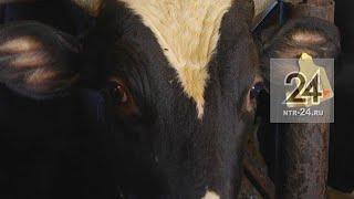 Ветврач за взятку пропускал на рынок Нижнекамска непроверенную говядину