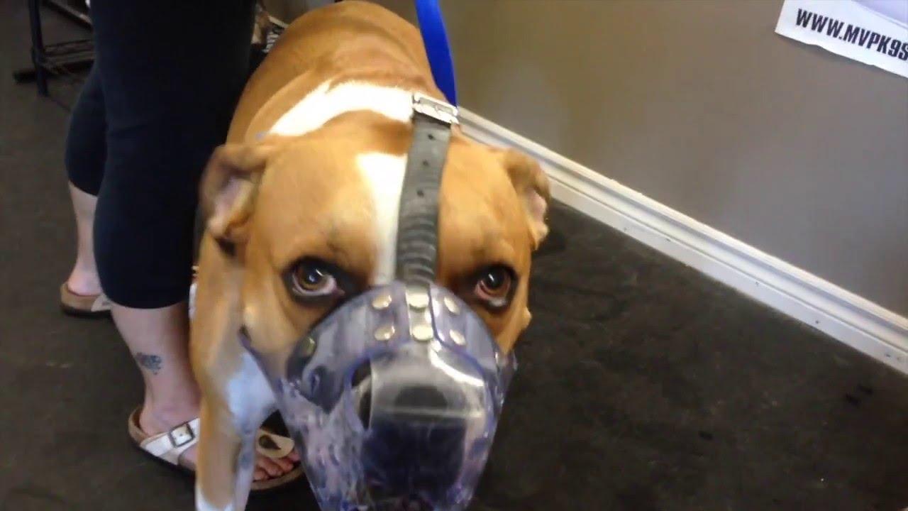 E Collar Training For Aggressive Dogs