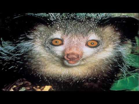 World's Weirdest Endangered Species (Top 10)