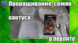 Проращивание семян кактуса безземельным способом в перлите в домашних условиях.Часть 1