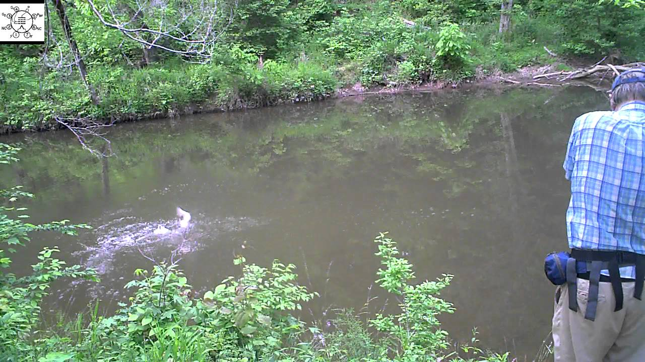 Second Chain Pickerel At New Hope Creek YouTube