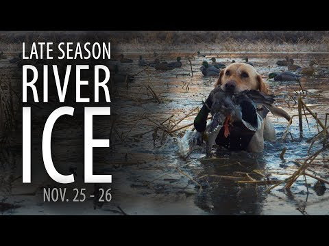 ICE - Late Season Mississippi River Duck Hunting | As Good As It Gets! | Nov. 25-26