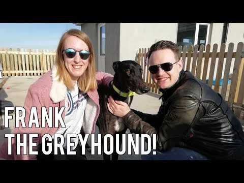 ADOPTING OUR GREYHOUND (& why they make great pets!) | Storytime & Vlog
