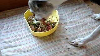 今日の食餌の内容は、鶏骨付き肉7割とキャベツ・ニンジン・卵殻のミック...