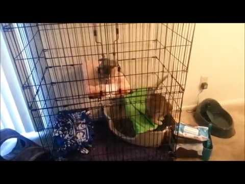 How To Make Cage For Cat