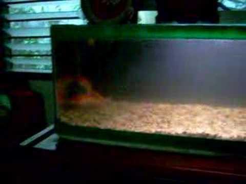 how to make aquarium over head drip filter