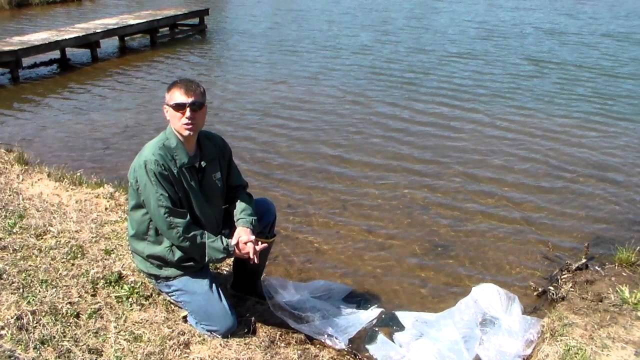 Stocking a pond with shellcracker bluegills and channel for Stocked fishing ponds