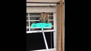 お邪魔します…家に入ってきたフクロウに丁重に出て行ってもらうには。