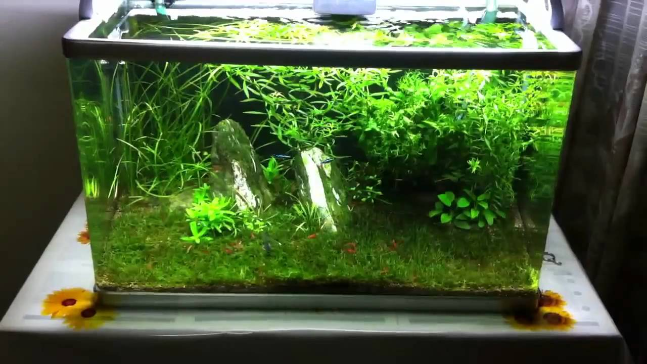 15 Gallon Planted Tank   My Little Green Corner   YouTube