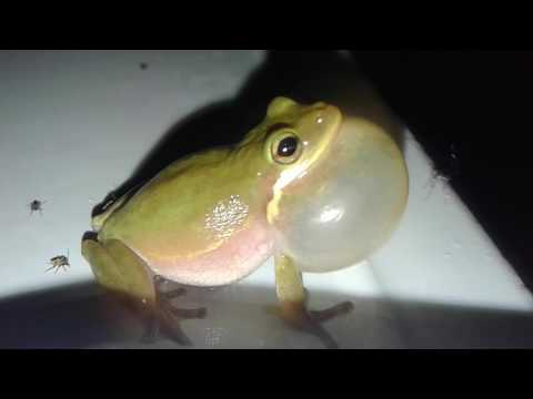 When a frog croaks (literally) |Ruby's Zoo (DON'T FORGET TO SUBSCRIBE FOR MORE AWESOME CONTENT)
