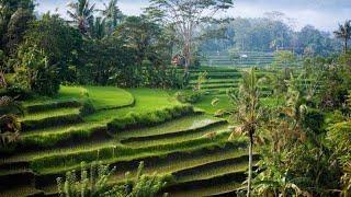 Органические удобрения из сапропеля для выращивания риса