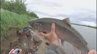Shore Fishing For Salmon