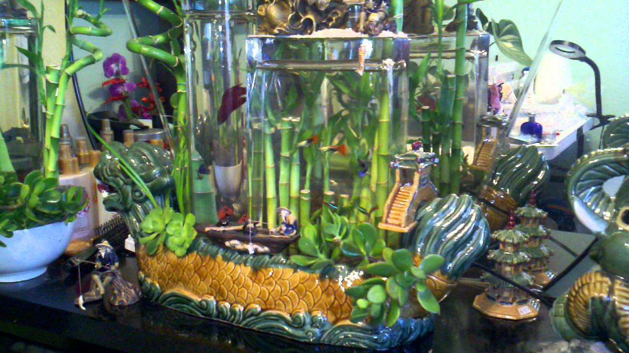 Lucky Bamboo Gravity Aquarium Youtube