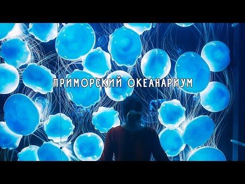 ПРИМОРСКИЙ ОКЕАНАРИУМ. Владивосток, март 2017