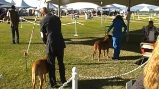 Coyote Cluster- Day-3  Dogue De Bordeaux Best Of Breed Ring