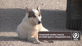 Рязанский Хатико спасён. История одного преданного пса. «9 телеканал» Рязань