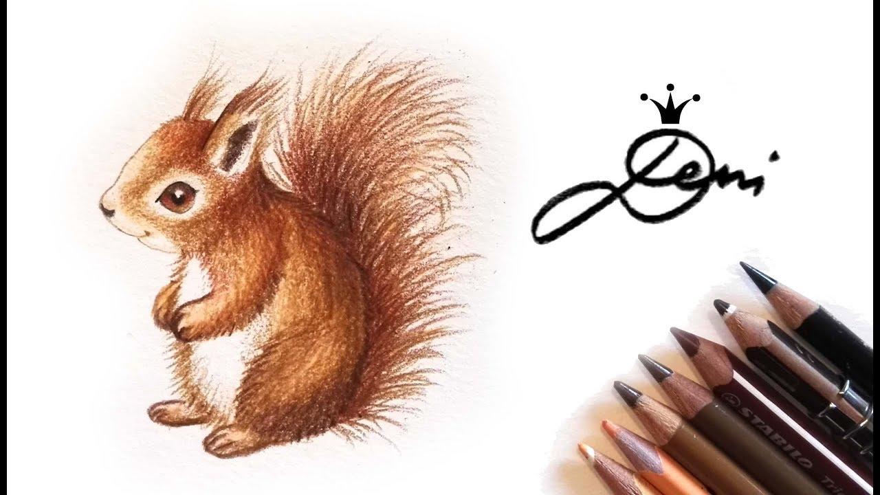 Eichhörnchen Zeichnung Squirrel Drawing катеричка рисунка