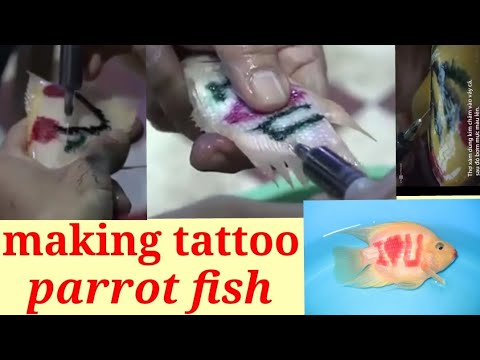Making Tattoo On Parrot Fish Must Watch