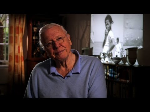 Attenborough's Recordings - David Attenborough: The Early Years - BBC Four Attenborough Collection