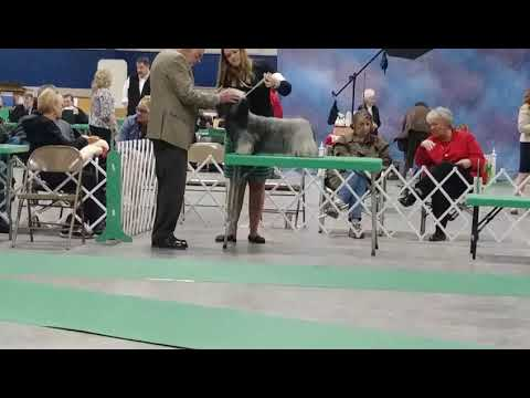 3.29.18 NE WI Dog Show Classic - AKC Terrier Group - Skye Terrier