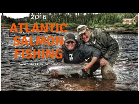 Atlantic Salmon Newfoundland and Labrador 2015