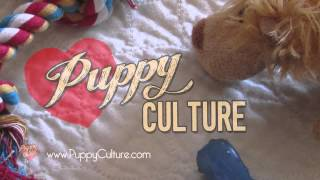 """The opening to our new puppy rearing and socialization film, """"Puppy Culture"""""""