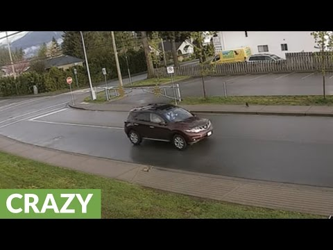 Squirrel almost hit by car, chased by crow & cat in under a minute!
