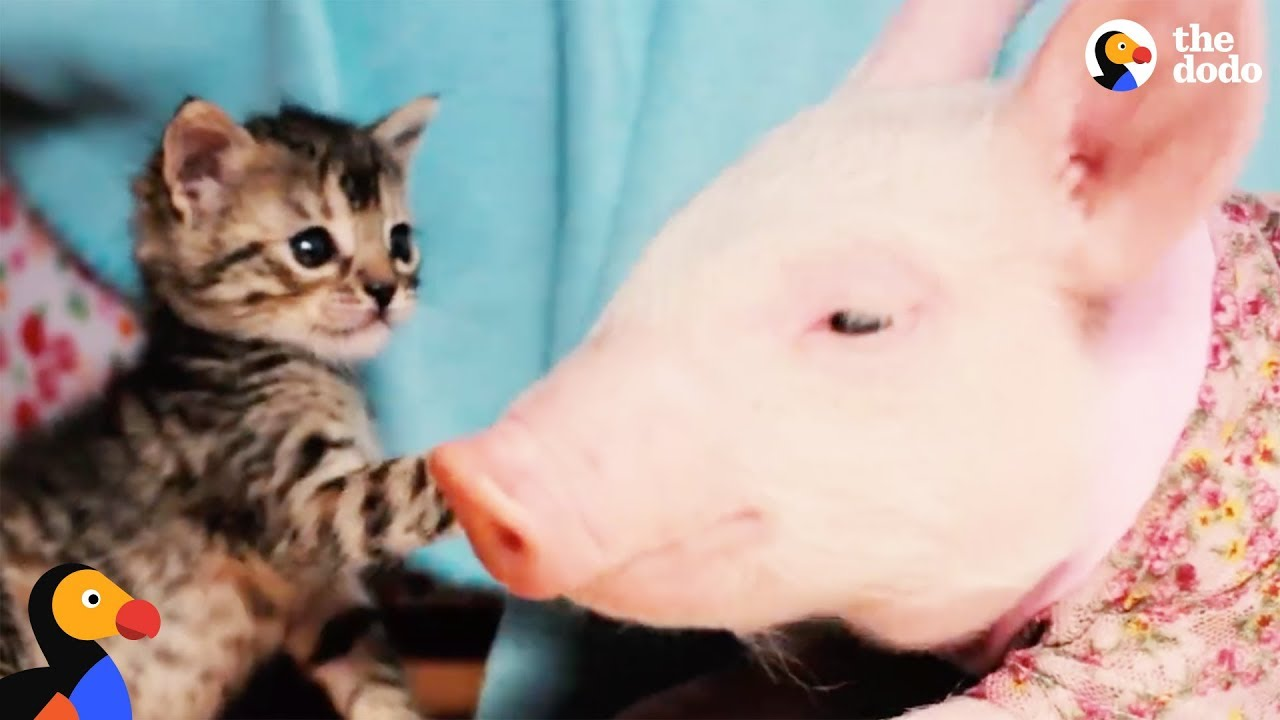 Cats That Are Best Friends with Other Animals  | The Dodo