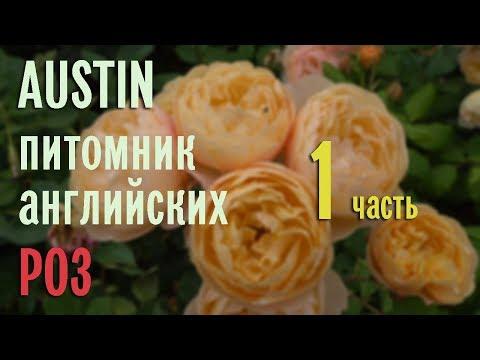 Буйство английских роз в питомнике AUSTIN . Эпизод 1.