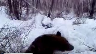 Шел на зайца, попал на медведя: небывалый случай в тайге