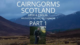 SCOTLAND CAIRNGORMS   WILDLIFE PHOTOGRAPHY   Part 1   RED DEER & GOLDEN EAGLES